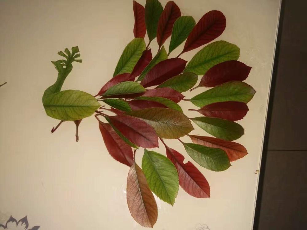 幼儿园粘贴画绘画秋天的树叶——师乐汇幼儿教师教育网图片