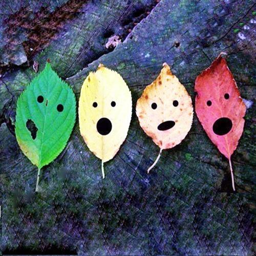 树叶也疯狂