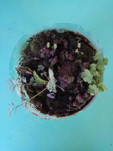我种的植物,猜猜看它是什么?